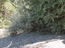 Un lapin qui a posé pendant près d'une minute. En réalité, je crois qu'il était surtout flippé...