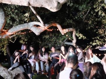 Le plus bel arbre de Marston Quad dans lequel il est possible de grimper.