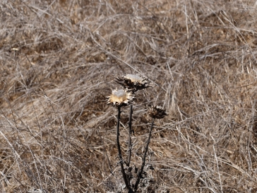 Des plaines et des collines de végétation desséechée : le summum du jardin romantique et mélancolique