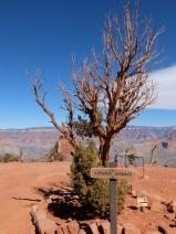 La Crête du Cèdre : un plateau parfait pour faire une pause.