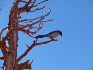 Petit oiseau chapardeur, qui surveillait de très près les cacahuètes de Martin