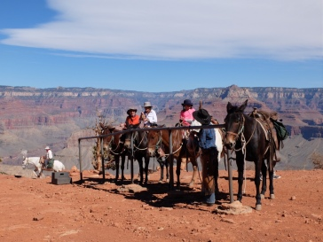 Les mules empruntent le même chemin que nous. Autant vous dire que c'est assez impressionnant !
