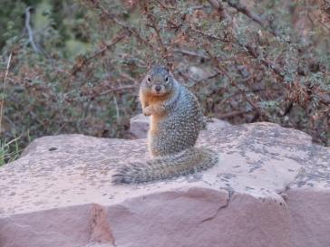 """Un écureuil... surpris ! Jérémy a dit """"Oh, look"""" et au même moment, l'écureil a tourné la tête vers nous l'air de dire """"oh, je ne vous avais pas vus !"""". Et clic. Dans la boite !"""
