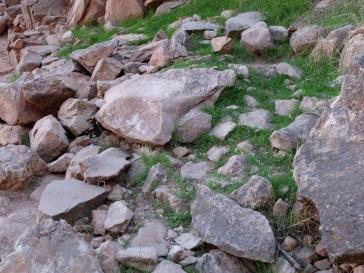 On s'est encore moqué de moi, car cette photo ne montre rien, mais j'aimais bien le mélange des pierres et de l'herbe.