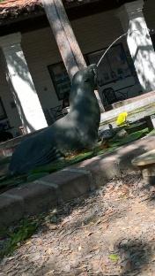 C'est l'histoire d'une tortue qui voulait être une otarie...