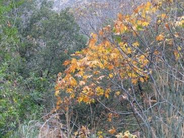 Rares touches d'automne dans le paysage