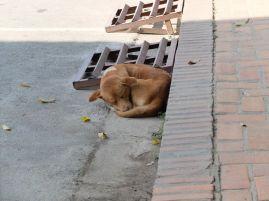 Encore ces chiens dans la rue, toujours aussi calmes.