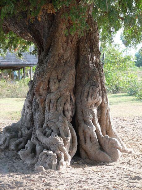Un arbre fantastique avec ses formes humaines...
