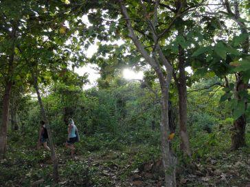 Dans la forêt laotienne...