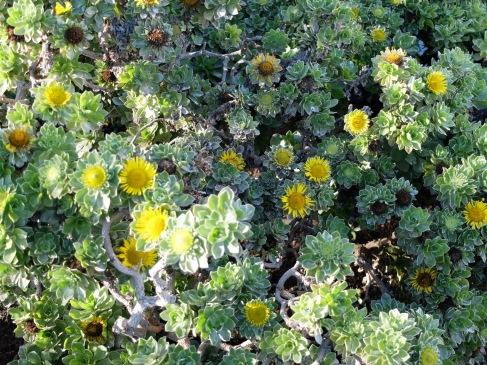 Curiosité végétale : on dirait des plantes grasses.