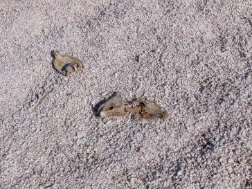 Les cadavres de poissons desséchés jonchent le sol par centaines...