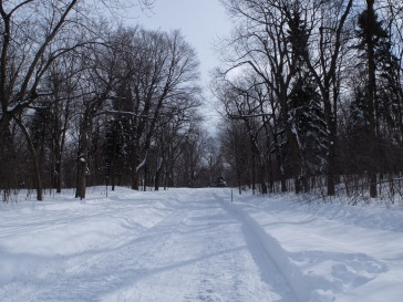 Encore une allée bordée d'arbres qu'on appellera l'allée bordée d'arbres.