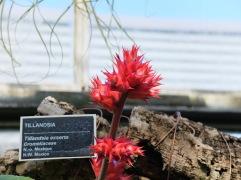 L'étiquette est fournie avec la plante.