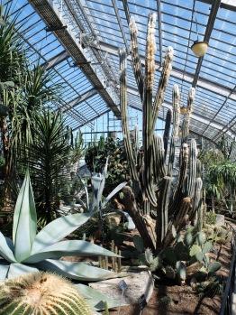 Des cactus ! Dans la serre des plantes issues de milieux désertiques.