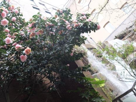 Des fleurs et des cascades.