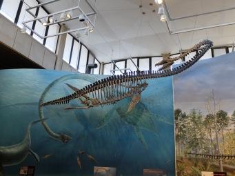 """Un élasmosaure, appelé aussi """"cygne-lézard"""". Brrrr, c'est à la fois effrayant et fascinant !"""