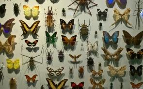 Que d'insectes, que d'insectes !