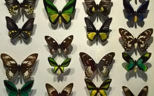 Extrait d'un panneau avec des papillons aux couleurs assorties.