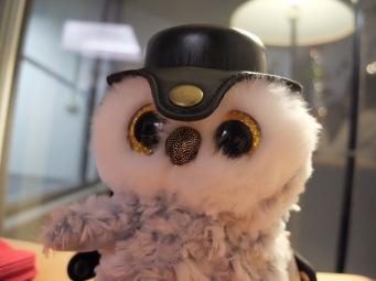 Ma nouvelle amie Cowlette Edwige, ramenée par Maÿlis et déguisée par je-ne-sais-plus-qui avec l'étui de de mon appareil photo.