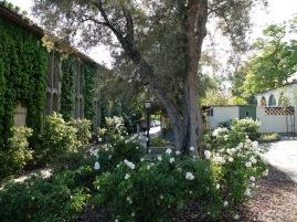 Le campus de Scripps en fleurs