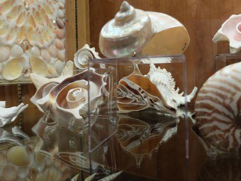 Un petit aperçu de la collection de coquillage de Gretchen Osgood Warren : les coquillages découpés pour en révéler l'intérieur sont mes préférés.