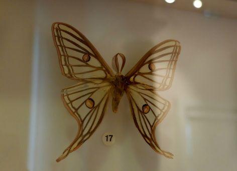 L'Isabelle de France avec de très mignonnes antennes en forme de feuille.