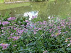 Petite vue sur le jardin en fleurs