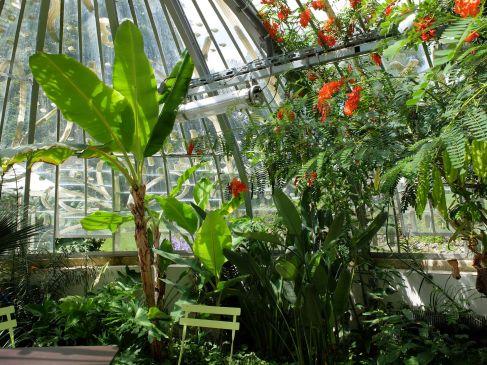 Ambiance tropicale au jardin des plantes.
