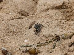 Un crabe d'un joli vert.