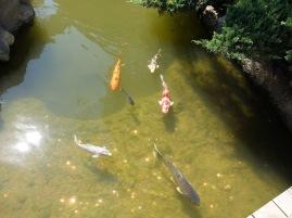 """""""Les petits poissons dans l'eau, nagent, nagent, nagent..."""" Enfin, """"petits"""" n'est peut-être pas le meilleur qualificatif."""