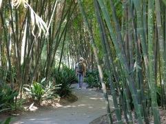 Jungle mystérieuse (bis)