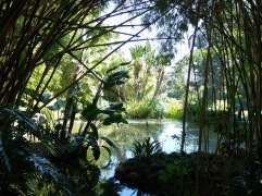Jungle mystérieuse