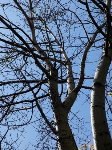 Un arbre étrange.