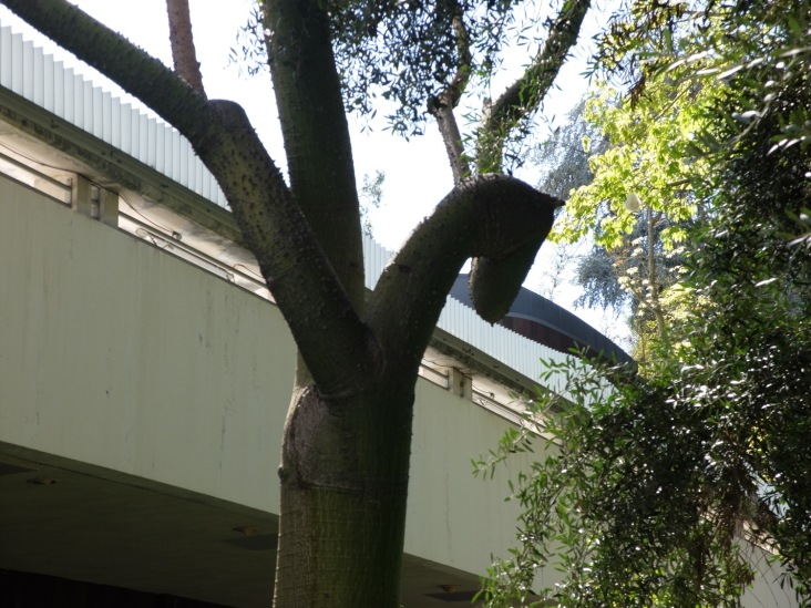Une tête de cheval cachée dans une branche ou ce moment où l'on se dit qu'on a vu trop de Degas pour la journée...