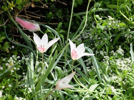 J'ai eu un gros coup de coeur pour ces fleurs roses. Je ne sais pas du tout ce que c'est, mais j'adorerais en avoir dans mon jardin !