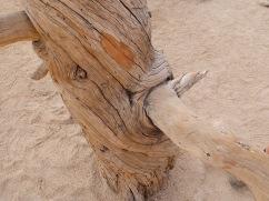 Un arbre tout doux à caresser