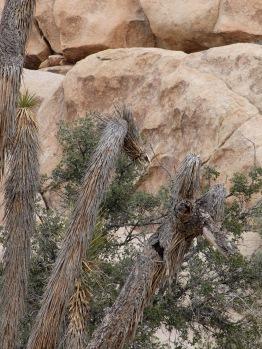 De la végétation à la forme animale (vous voyez les têtes ?)