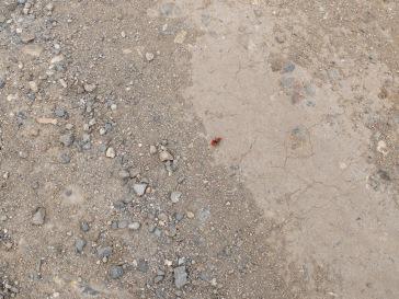 Un insecte étrange