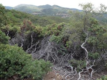 Des branches grisâtres qui auraient pu servir d'inspiration pour la Belle au Bois Dormant.