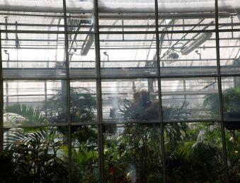 Derrière une des serres inacessibles, des plantes tout à fait étranges qu'on se demande si elles ne sont pas le fruit d'expérimentations d'un botaniste un peu fou.
