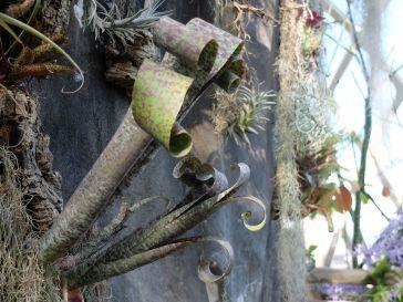 Plante tropical inspiratrice de perruques baroques.