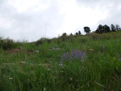 Quelques fleurs violettes.