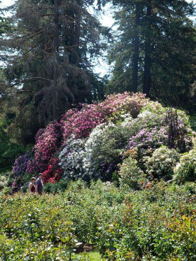 Bouquet de fleurs et surtout de couleurs,