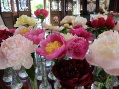 Chaque fleur est présentée dans un vase individuel avec une étiquette légendée. Une belle exposition !
