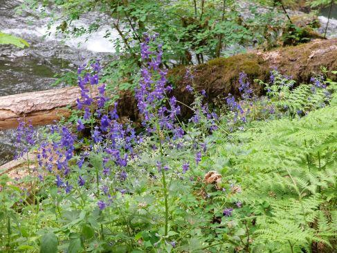 De jolies fleurs sauvages.