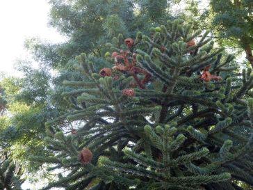 L'arbre aux hérissons (1)