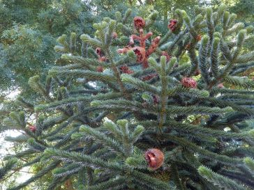 L'arbre aux hérissons (2)