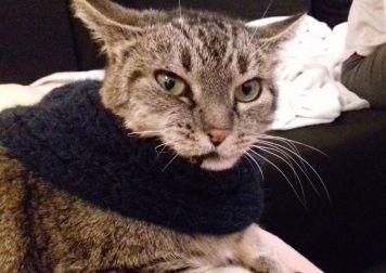 Les expérimentations sur le chat quand on tricote....
