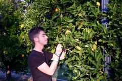 Les orangers de Scripps (2)