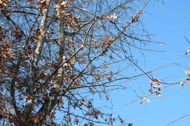 Des écureuils gambadant joyeusement dans les branchages. Difficile de les prendre en photo